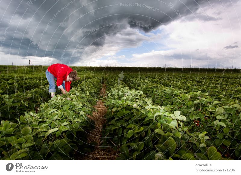 Human being Sky Nature Plant Summer Environment Landscape Field Climate Beautiful weather Storm Strawberry Climate change Bad weather Storm clouds