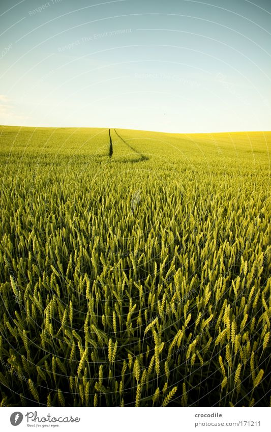 Sky Nature Plant Summer Landscape Environment Weather Field Climate Beautiful weather Cornfield Wheat Foliage plant Grain Agricultural crop Wheatfield