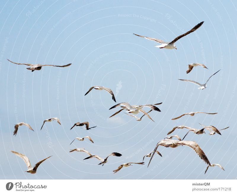 Sky Vacation & Travel Ocean Far-off places Freedom Air Horizon Wind Flying Feather Many Target Beautiful weather Sign Baltic Sea Seagull