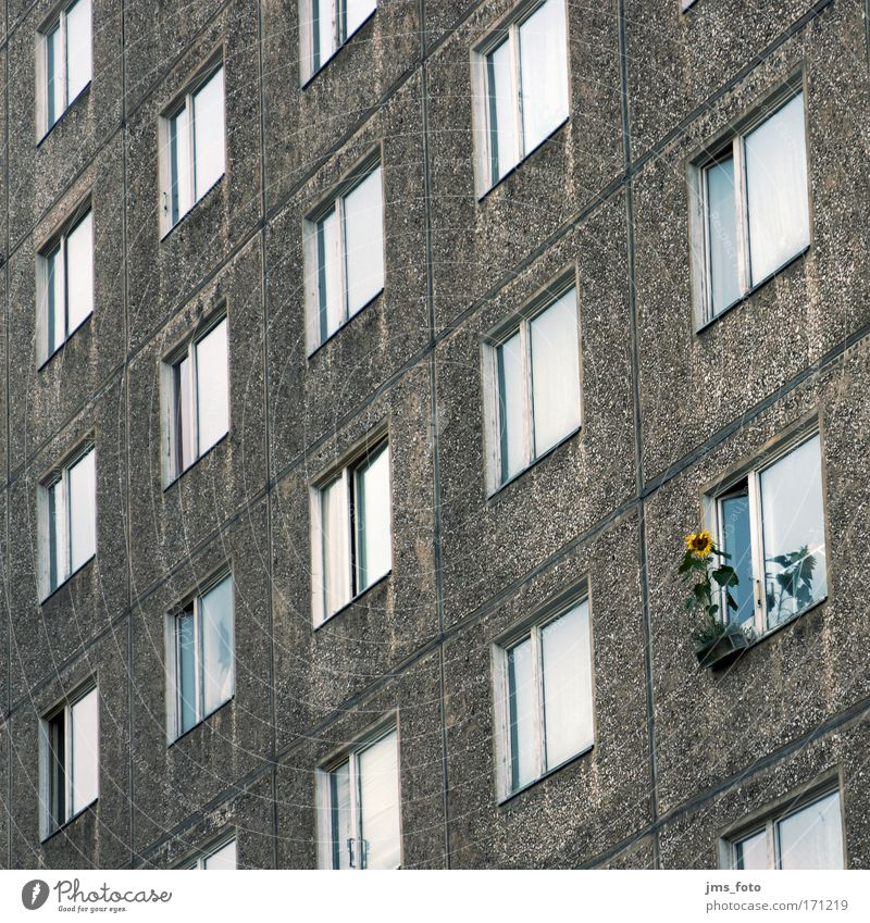 Flower House (Residential Structure) Window High-rise Facade Living or residing Uniqueness Sunflower Optimism