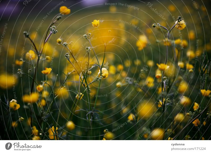 Nature Beautiful Flower Plant Yellow Colour Life Meadow Emotions Blossom Spring Freedom Happy Dream Sadness Elegant