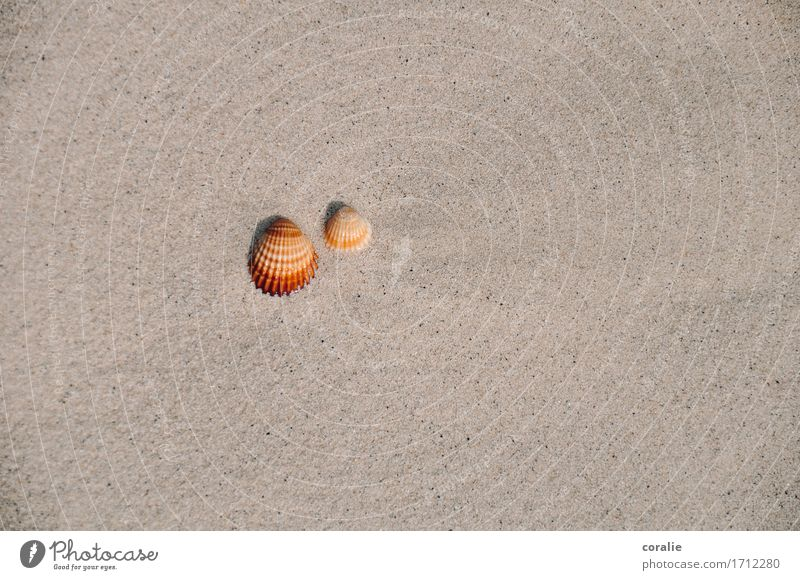 togetherness Summer Maritime Mussel 2 Together Couple Beach Walk on the beach Flotsam and jetsam Mediterranean sea Vacation & Travel Souvenir Seafood