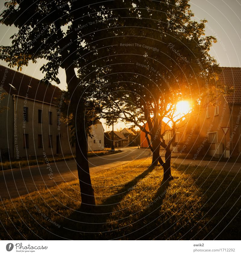 evening peace Environment Nature Cloudless sky Summer Climate Beautiful weather Tree Grass Branch Village Populated House (Residential Structure) Places Facade