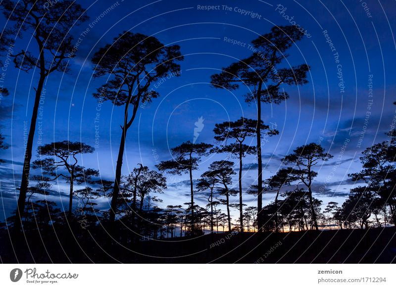 silhouette landscape with pine forest at Phu Soi Dao Beautiful Vacation & Travel Sun Nature Landscape Plant Sky Tree Park Forest Peak Dark Uniqueness Blue