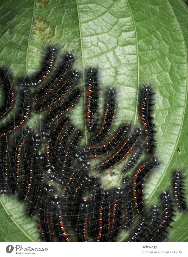 Nature Plant Leaf Animal Legs Growth Group of animals Insect Butterfly Virgin forest Accumulation Crawl Heap Caterpillar