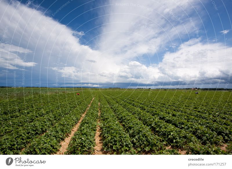 Nature Sky Plant Summer Clouds Landscape Field Wind Environment Esthetic Climate Exceptional Beautiful weather Strawberry Foliage plant Berries