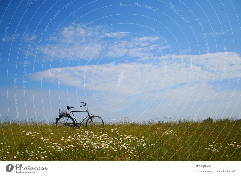 Nature Sky Sun Flower Summer Vacation & Travel Calm Loneliness Relaxation Grass Contentment Bicycle Hiking Trip Meadow