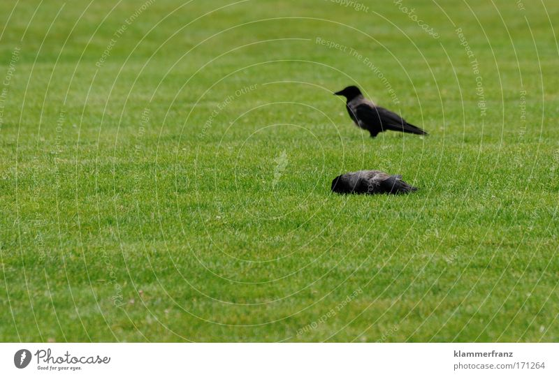Flat laid Colour photo Funeral service Nature Plant Animal Grass Garden Park Meadow Wild animal Dead animal Bird 2 Pair of animals Observe Together Sleep Wait