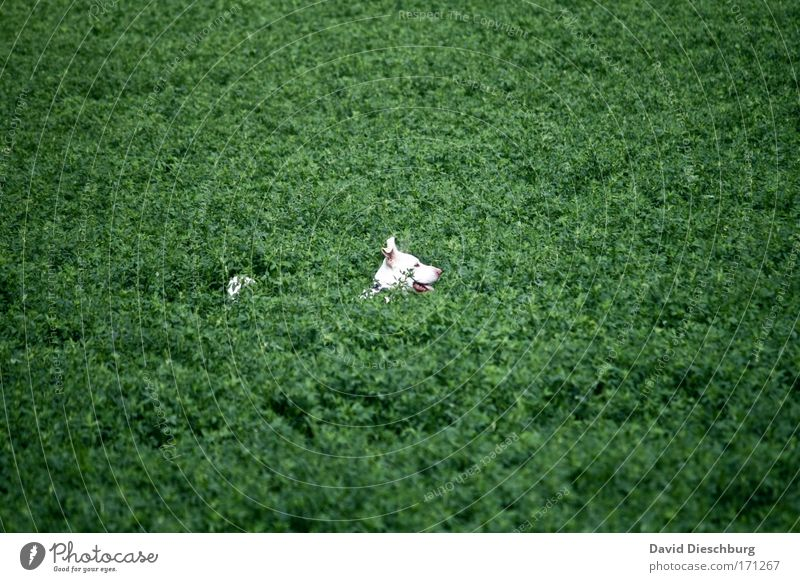 Dog Nature White Green Plant Animal Landscape Playing Head Field Bushes Search Animal face Hide Pet Foliage plant