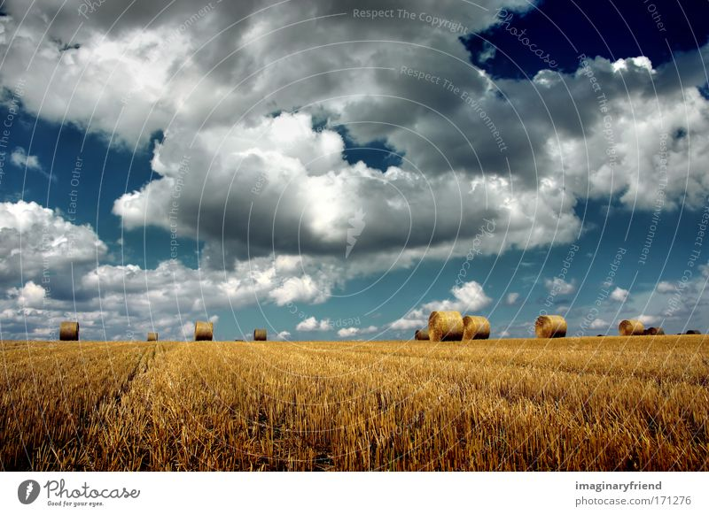harvest Multicoloured Exterior shot Deserted Day Deep depth of field Central perspective Nature Landscape Sky Clouds Storm clouds Summer Autumn