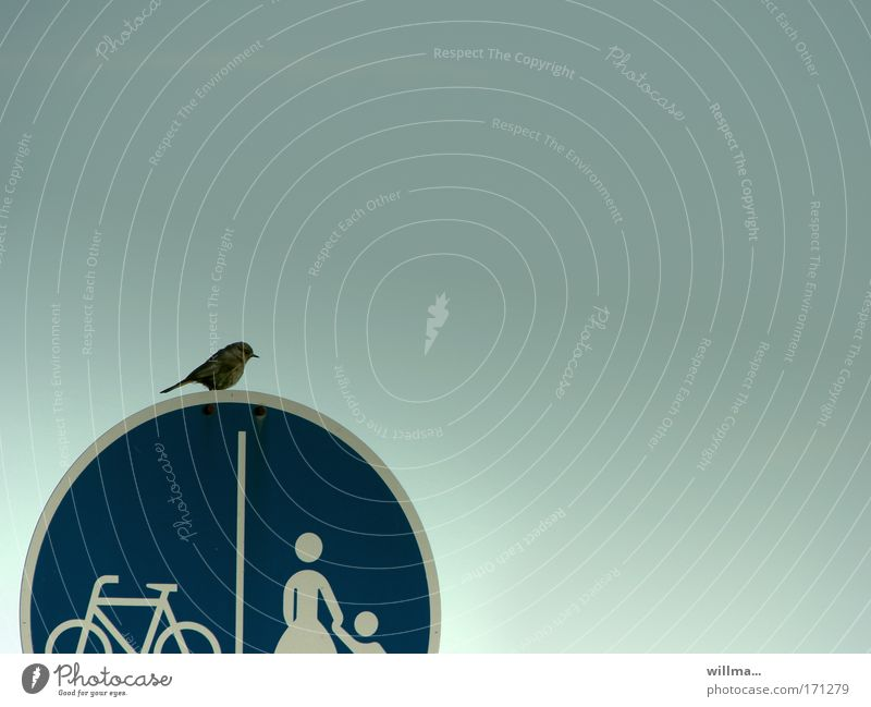 Air Bird Bicycle Flying Signs and labeling Aviation Break Round Concentrate Sidewalk Traffic infrastructure Mobility Wanderlust Road traffic