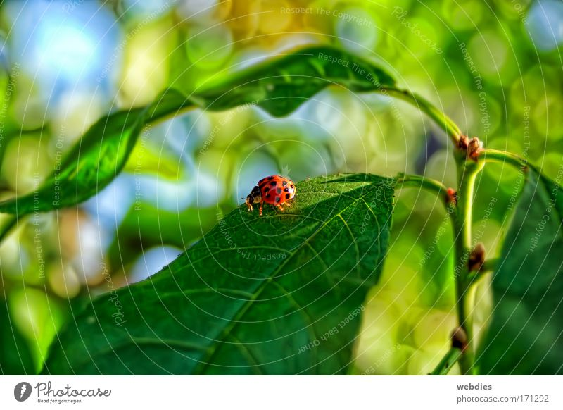Nature Plant Colour Leaf Animal Spring Contentment Happiness Beautiful weather Beetle Foliage plant