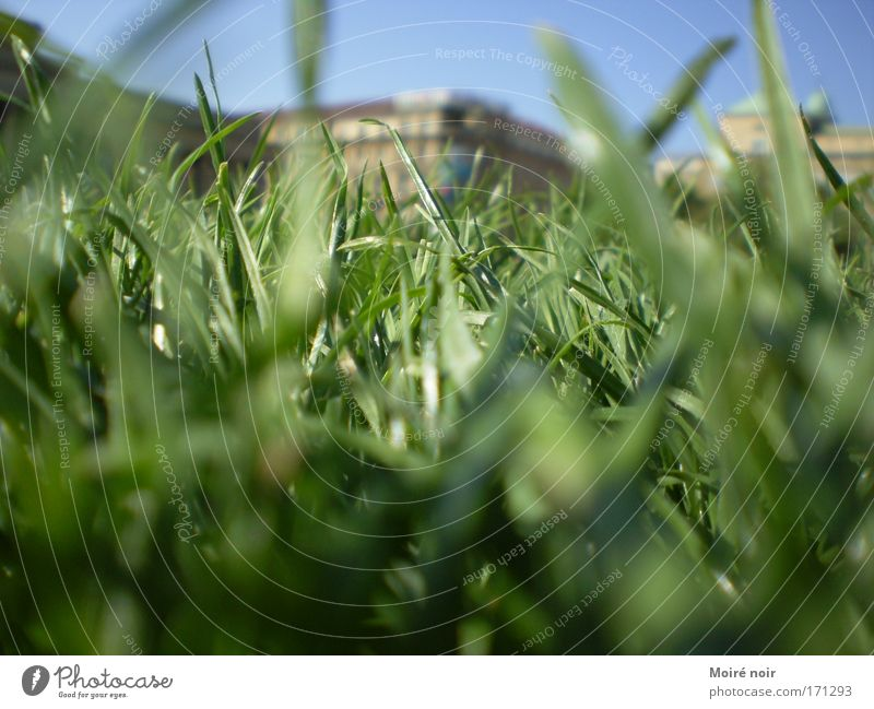 Blue Green Relaxation Grass Spring Park Horizon Places Happiness Esthetic Depth of field Blue sky Stuttgart Cloudless sky Midday Spring fever