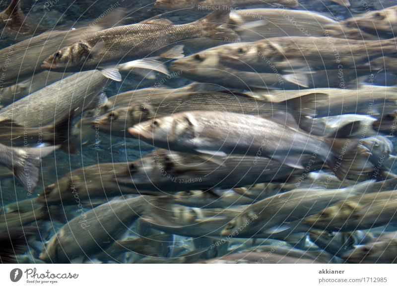 "Fresh fish Animal Wild animal Fish Aquarium ""Fish animals animal kingdom animal world Living thing Nature fauna Water group Herring Herring,"" Group of animals"