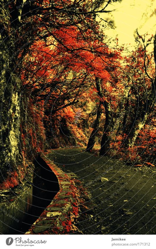 off Colour photo Exterior shot Day Tourism Plant Spring Summer Autumn Tree Forest Deserted Lanes & trails Walking Cold Warmth Brown Yellow Gold Red Trust