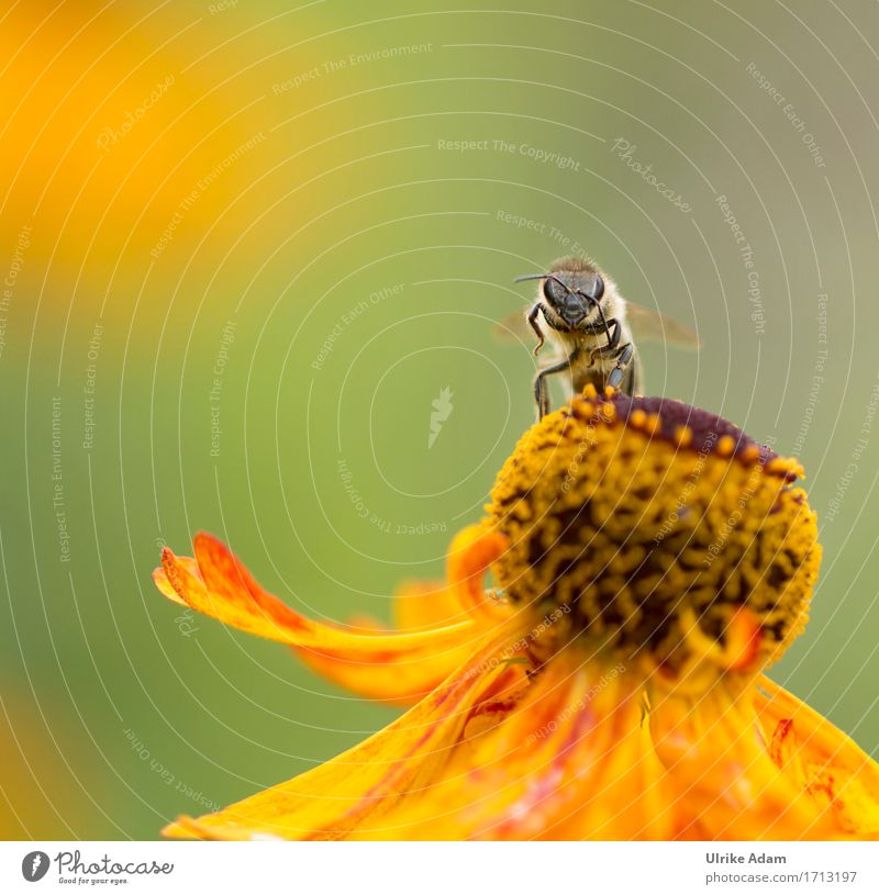 Hello! Nature Animal Summer Autumn Beautiful weather Plant Flower Blossom sun bride Garden Bed (Horticulture) Park Wild animal Bee Insect 1 Work and employment