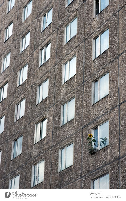 Flower at window Colour photo Exterior shot Deserted Deep depth of field Long shot Living or residing Ghetto Individualist Sunflower High-rise Facade Life Town