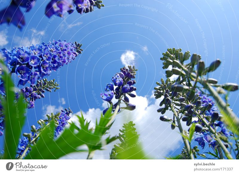 Nature Beautiful Sky White Flower Green Blue Plant Summer Clouds Blossom Environment Tall Growth Violet Blossoming