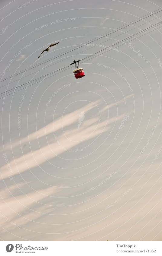 Clouds Far-off places Heaven Bird Flying Free Aviation Level Airplane Seagull Black-headed gull  Cable car Wire cable In the plane Altitude flight