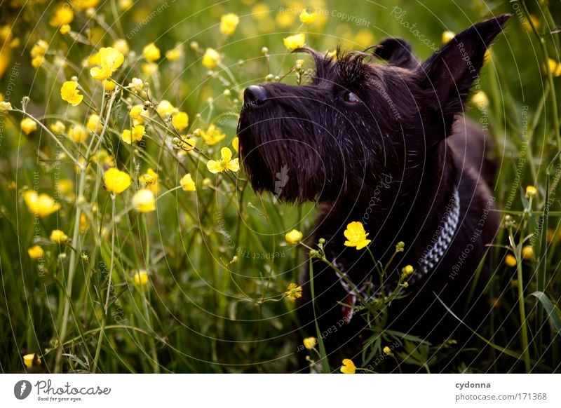 Dog Nature Beautiful Plant Flower Animal Calm Environment Life Meadow Freedom Movement Grass Blossom Sadness Dream