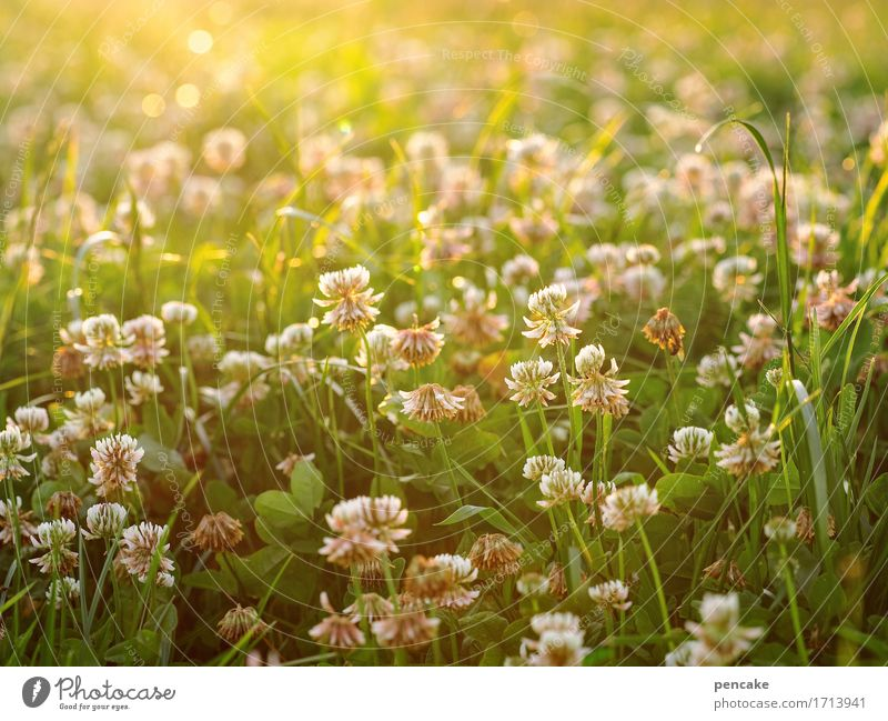 fluorescent material Nature Landscape Elements Sun Sunlight Summer Beautiful weather Grass Leaf Blossom Agricultural crop Meadow Field Fragrance Bright Warmth