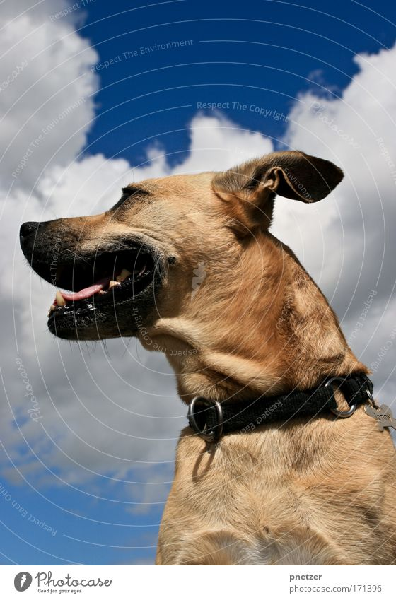 Nature Sky Summer Clouds Animal Dog Air Brown Large Sit Animal face Observe Beautiful weather Pet