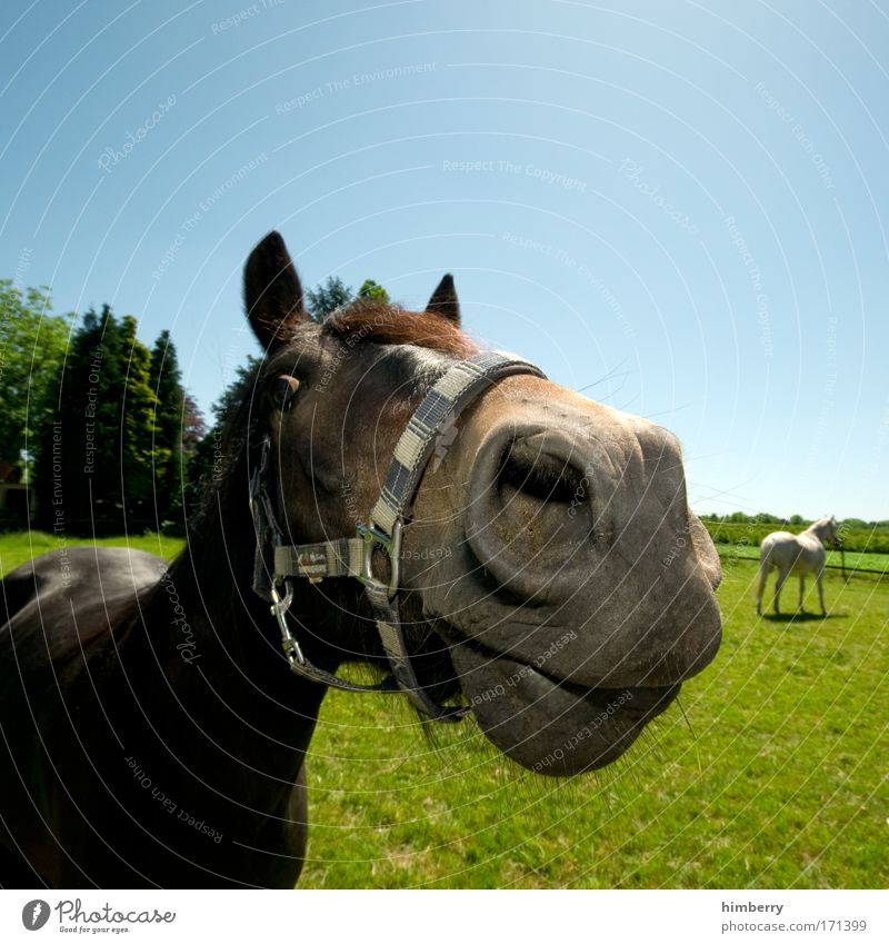 a horsepower Colour photo Multicoloured Exterior shot Detail Copy Space top Copy Space bottom Wide angle Animal portrait Looking Looking into the camera Forward
