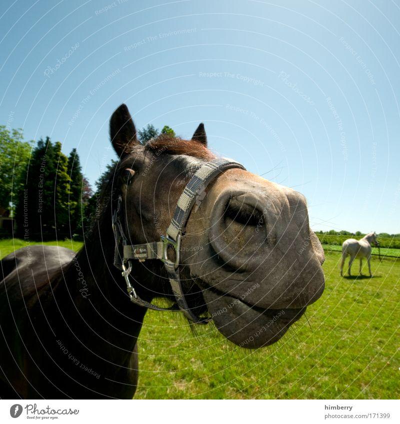 Nature Tree Plant Joy Animal Meadow Landscape Grass Field Power Horse Logistics Farm animal