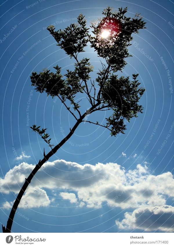Sky White Tree Blue Vacation & Travel Calm Clouds Relaxation Dream Contentment Idyll Illuminate Beautiful weather Weekend