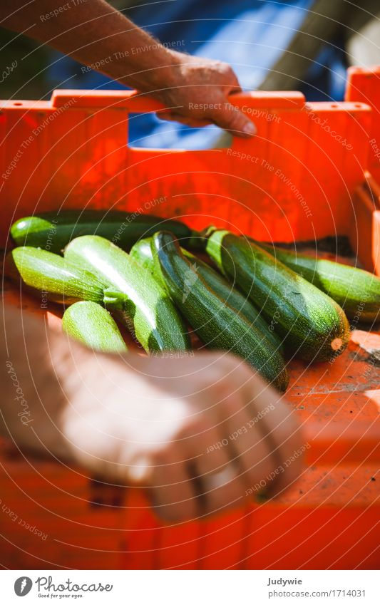 Harvest I Food Vegetable Zucchini Cucumber Nutrition Organic produce Vegetarian diet Lifestyle Healthy Healthy Eating Leisure and hobbies Thanksgiving Gardening