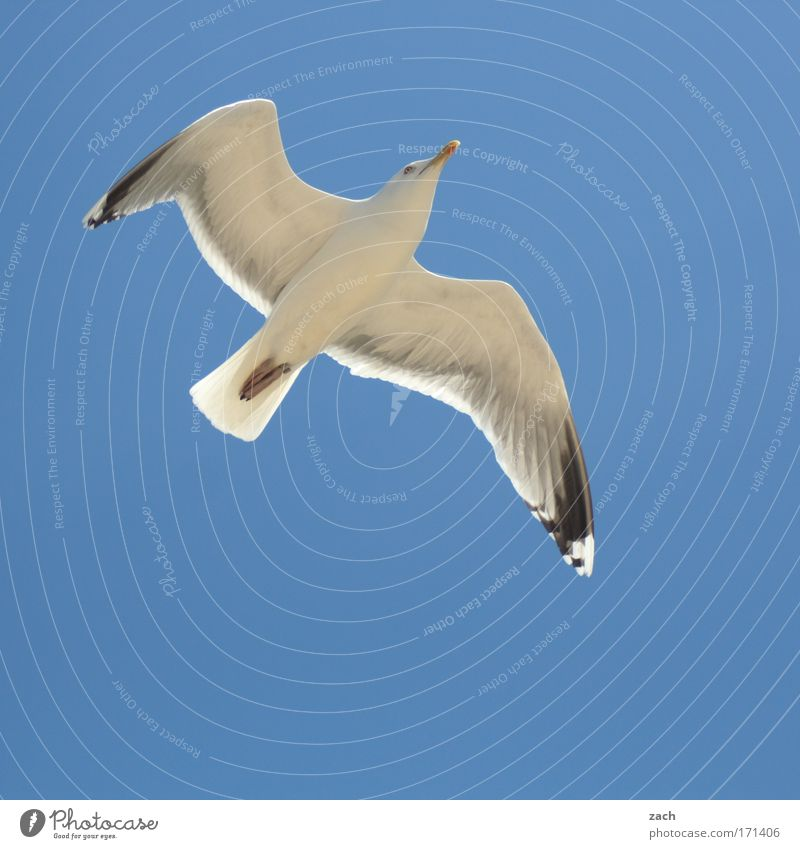 Flight 3211 Colour photo Exterior shot Deserted Copy Space bottom Neutral Background Day Sunlight Worm's-eye view Animal portrait Ocean Nature Sky Cloudless sky