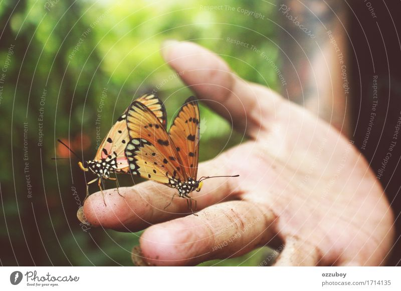 Butterflies Human being Young woman Youth (Young adults) Hand Fingers 1 18 - 30 years Adults Nature Animal Spring Summer Forest Farm animal Wild animal
