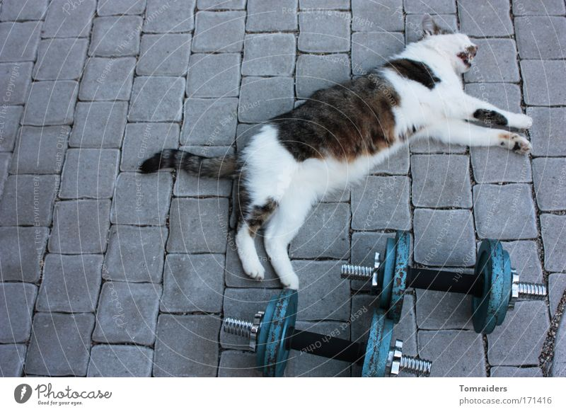 Cat Animal Calm Relaxation Sports Stone Power Wait Lie Break Uniqueness Serene Terrace Sports Training Pet Paving stone