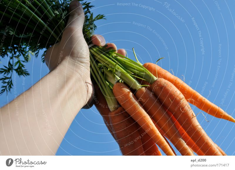 Carrots to power Colour photo Exterior shot Neutral Background Day Worm's-eye view Food Vegetable Lunch Dinner Organic produce Human being Masculine Arm Hand 1