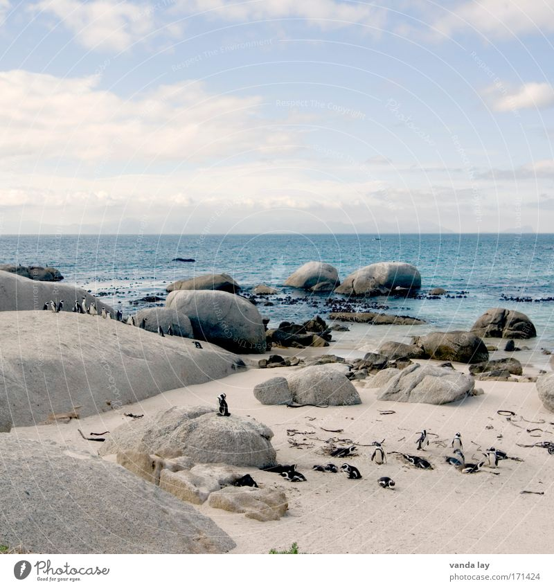 Penguin Paradise Colour photo Exterior shot Deserted Copy Space top Day Long shot Sand Water Sky Clouds Beautiful weather Hill Rock Coast Ocean Island Animal