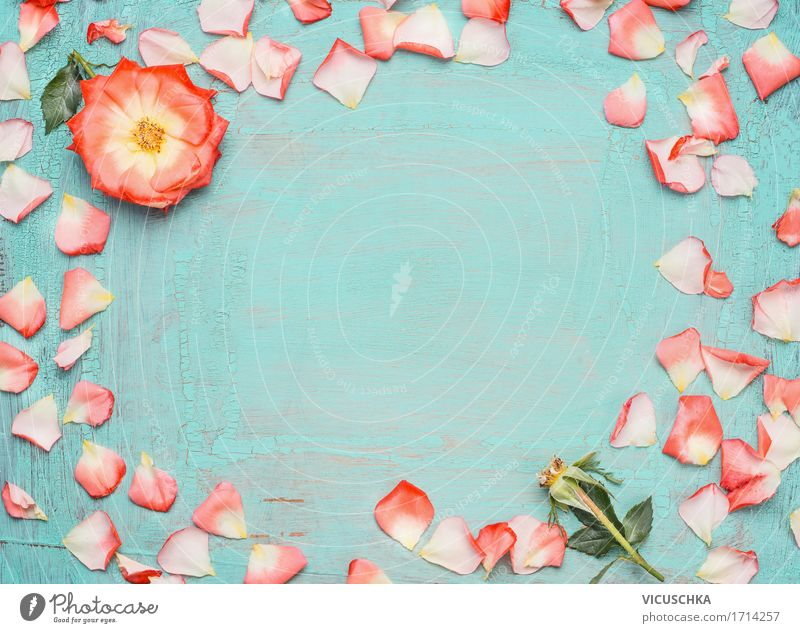 Nature Plant Blue Summer Flower Leaf Blossom Love Background picture Style Feasts & Celebrations Design Pink Decoration Birthday Rose