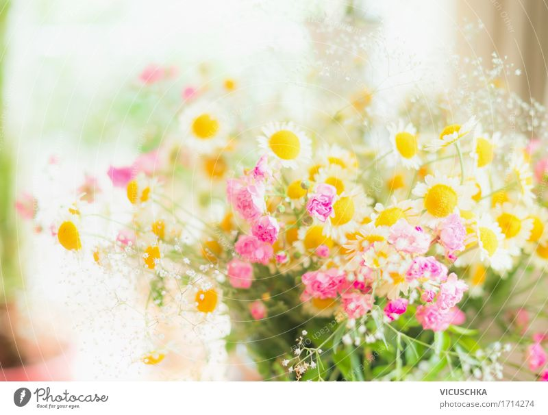 Nature Plant Summer Colour Flower Joy Yellow Interior design Lifestyle Bright Design Pink Flat (apartment) Wild Room Living or residing