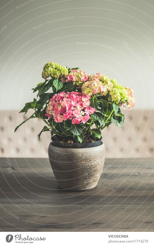 Hydrangeas in the pot on the table in the living room Lifestyle Luxury Elegant Style Design Living or residing Flat (apartment) Interior design Decoration