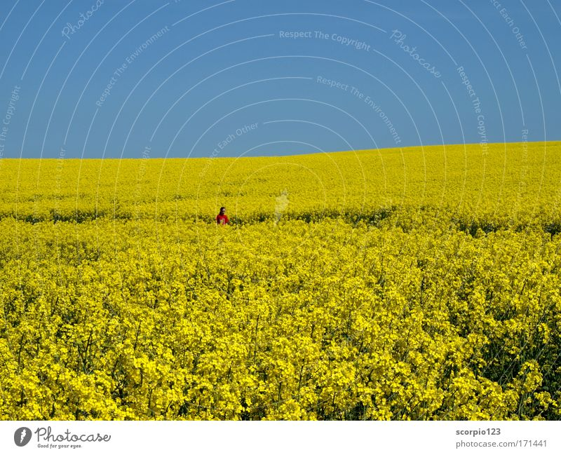 Human being Child Nature Girl Sky Blue Red Yellow Relaxation Spring Dream Field Pure Infancy To enjoy Beautiful weather