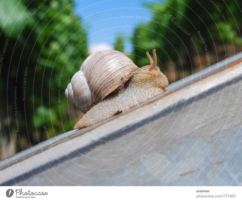 Nature Sky Animal Movement Lanes & trails Success Steel Career Snail Go up Stock market Slowly Macro (Extreme close-up) Upswing