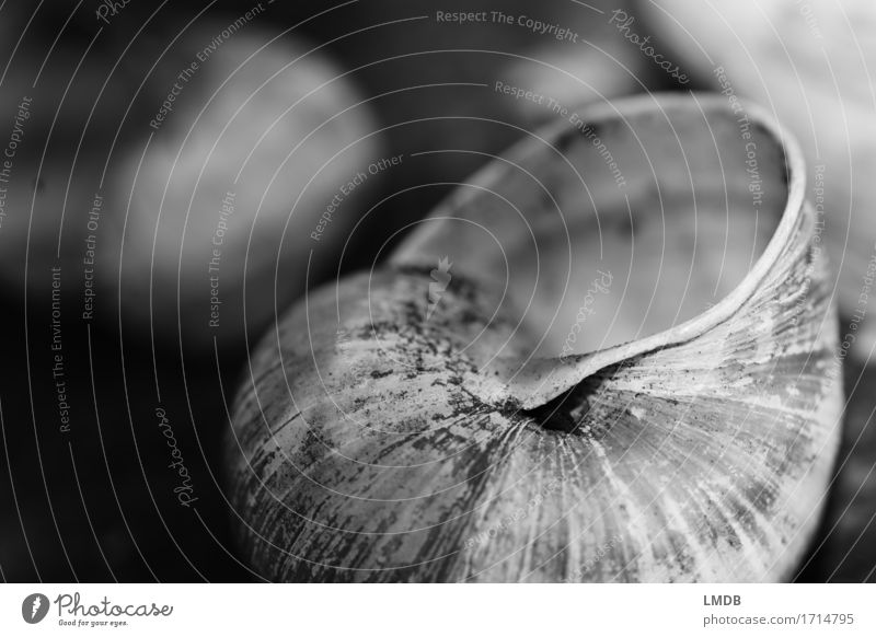 Snail apartment III Animal 1 Black White Hope Belief Humble Sadness Concern Grief Death Snail shell Remainder Sheath Transience Dark Black & white photo