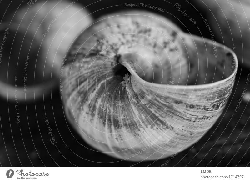 Auger bucket I Animal 1 Black White Belief Humble Sadness Concern Grief Death Snail shell Whorl Rotated Dirty Furrow Transience Decline Old Sheath Remainder