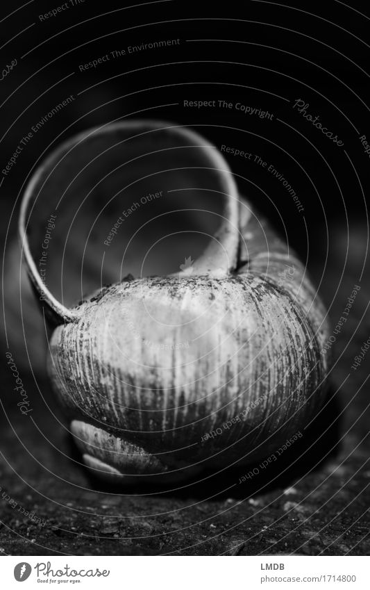 Snail shell - dark Animal Dead animal 1 Old Dirty Gloomy Black White Compassion Peaceful To console Caution Patient Calm Humble Sadness Concern Grief Death