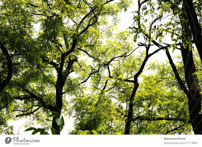 The clearing Worm's-eye view Trip Expedition Nature Plant Beautiful weather Tree Leaf Forest Wood Breathe Blossoming Relaxation Old Green Happy Spring fever