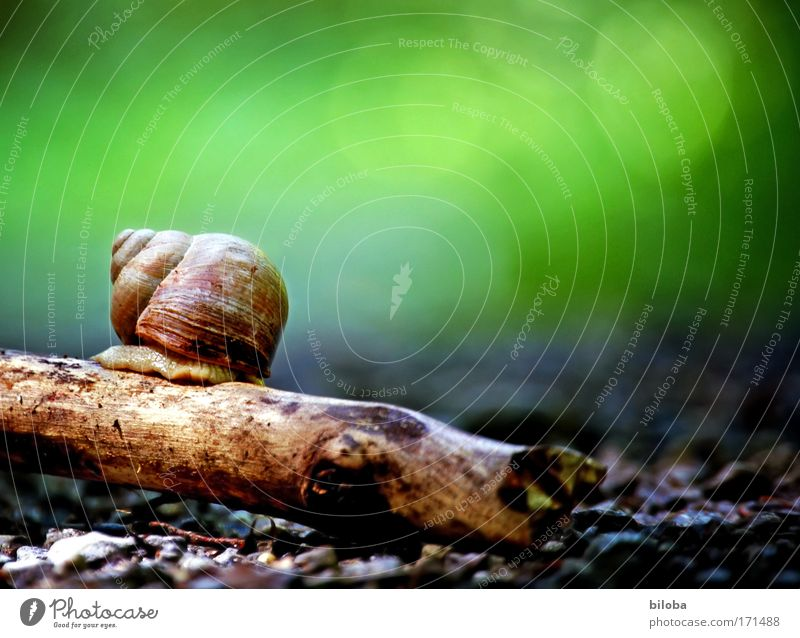 Snail, lonely, shy, searching: Colour photo Multicoloured Exterior shot Detail Deserted Copy Space right Copy Space top Day Contrast Blur Worm's-eye view