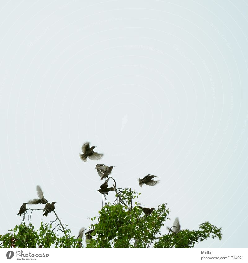 Sky Nature Tree Plant Summer Animal Life Movement Spring Environment Bird Together Flying Free Natural Wing