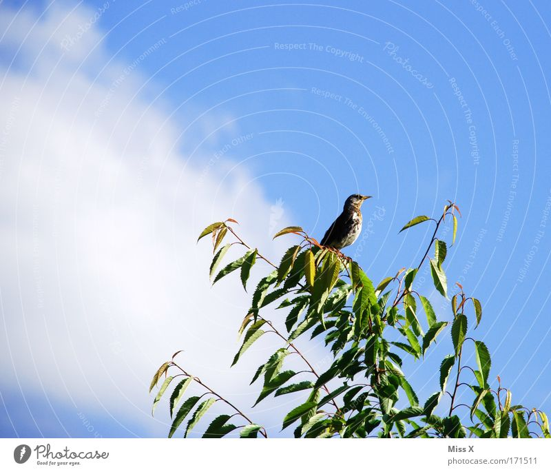 Sky Nature Summer Animal Leaf Spring Freedom Baby animal Bird Flying Wild animal Free Wing Bushes Beautiful weather Branch