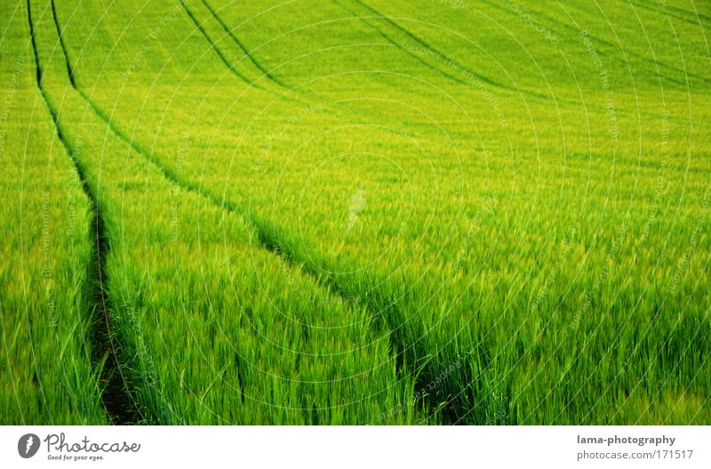 Nature Green Summer Plant Landscape Environment Meadow Grass Spring Field Wind Large Tracks Agriculture Grain Organic produce