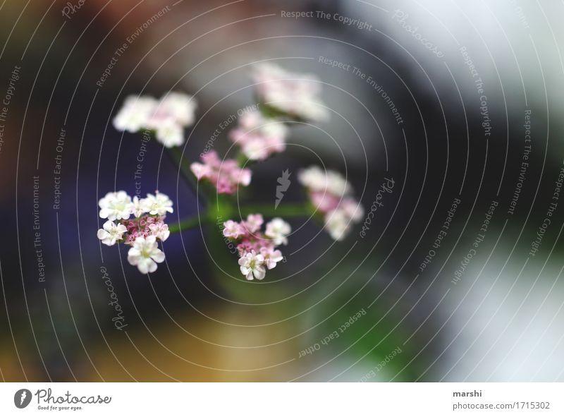 Nature Plant Summer White Flower Garden Moody Bushes Blossoming