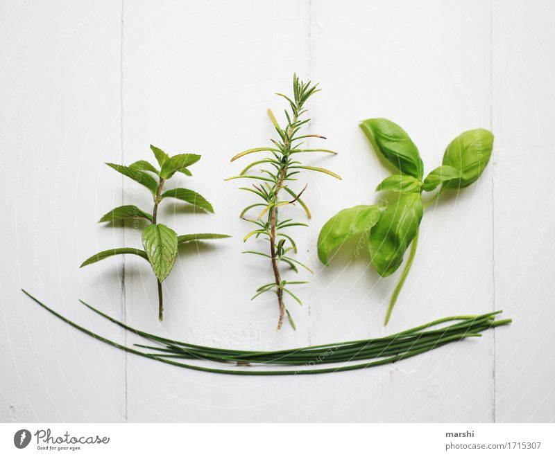 herbalism Nature Plant Green Herbs and spices Rosemary Mint Basil Chives Isolated Image Spicy Tasty Colour photo Interior shot Detail Arranged Picked Difference